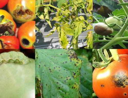 5 Jenis Hama dan Penyakit Pada Tumbuhan